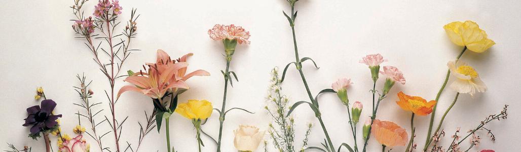 Bouquets cueillettes